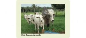 Seagro Maranhão