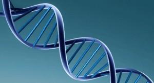 genetica-bovina