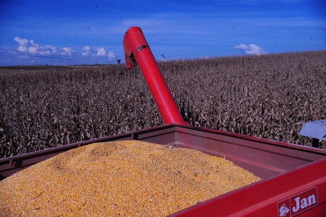 O preço milho continua sendo uma incógnita (Foto: Ernesto de Souza/Ed. Globo)
